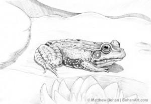 Green Frog Pencil Sketch