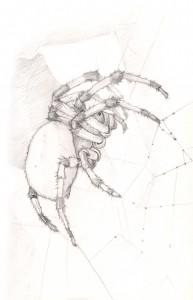 Marbled Orb Weaver Pencil Sketch
