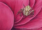 Crab Spider Transparent Watercolor 5x7 inches