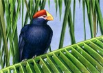 Violaceous Turaco Transparent Watercolor 11x14inches