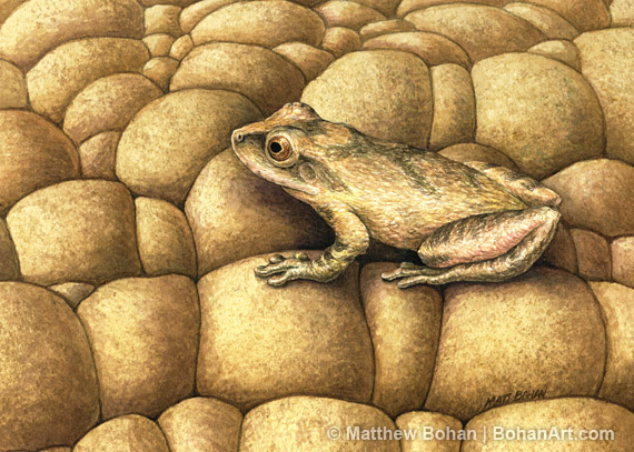 0a053d6c7 Spring Peeper Transparent Watercolor (5 x 7in)