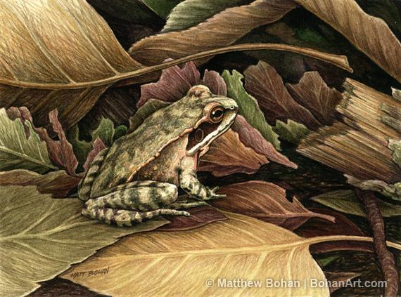 9806c71df Woodfrog Transparent Watercolor (5 x 7in)