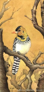 D'Arnaud's Barbet (Transparent Watercolor on W&N 140lb NCP Paper 5.5 x 13.5 in)