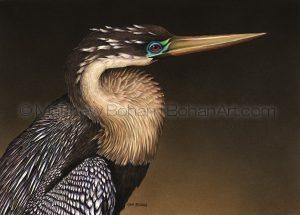 Female Anhinga (10x14in Transparent Watercolor)