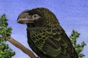 Smooth-billed Ani (Detail from 10x14in Transparent Watercolor on W&N 140lb HP paper)