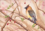 Cedar Waxwing (7x10-inch Transparent Watercolor on 140lb Arches HP Paper)
