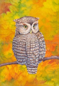 Eastern Screech Owl (7x 10-in Transparent Watercolor on Arches 140lb HP Paper)