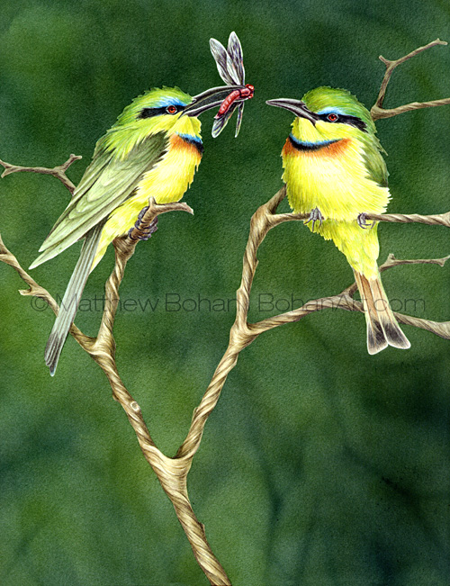 Little Bee Eaters (10x14 in Transparent Watercolor)