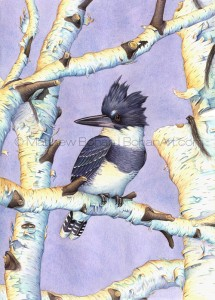 Belted Kingfisher on Birch (Transparent Watercolor on W&N 140lb NCP Paper 10 x 14 in) Original available