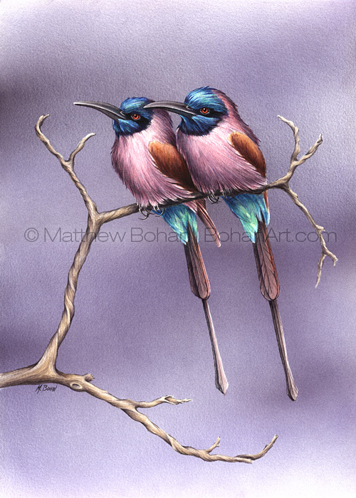 Carmine Bee Eaters (10x14 in Transparent Watercolor)