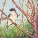 Eastern Phoebe on Staghorn Sumac: Transparent Watercolor and Ink PLUS Time-lapse Video