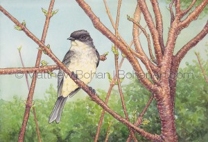 Eastern Phoebe on Staghorn Sumac (Transparent Watercolor and Ink 7x10 in)