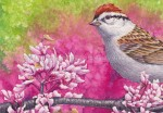 Chipping Sparrow (Detail) 7x10 inch Transparent Watercolor