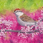 Chipping Sparrow Painting: Transparent Watercolor and Time-lapse Video