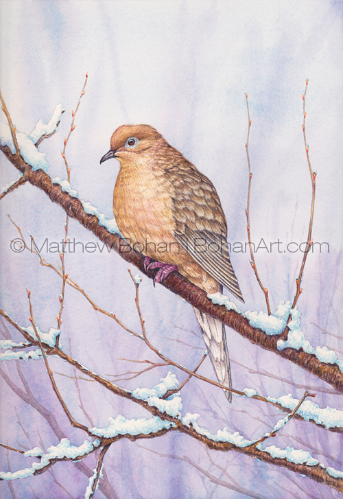 Mourning Dove (4x5 inch detail from 7x10 inch Transparent Watercolor Painting)