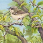 Female Black-throated Blue Warbler Transparent Watercolor & Time Lapse Video