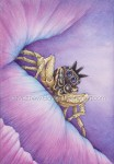 Male Dark Phase Dimorphic Jumping Spider (7x10 in Transparent Watercolor on W&N 140Lb HP Paper)