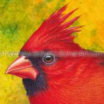 Fall Northern Cardinal Transparent Watercolor & Time-Lapse Video