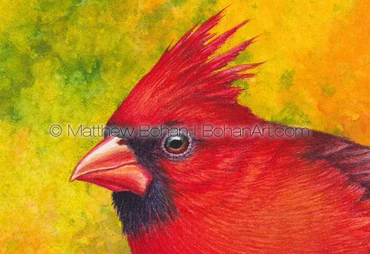 Northern Cardinal (3x4 inch detail from 7x10 inch Transparent Watercolor on Arches 140lb HP paper)