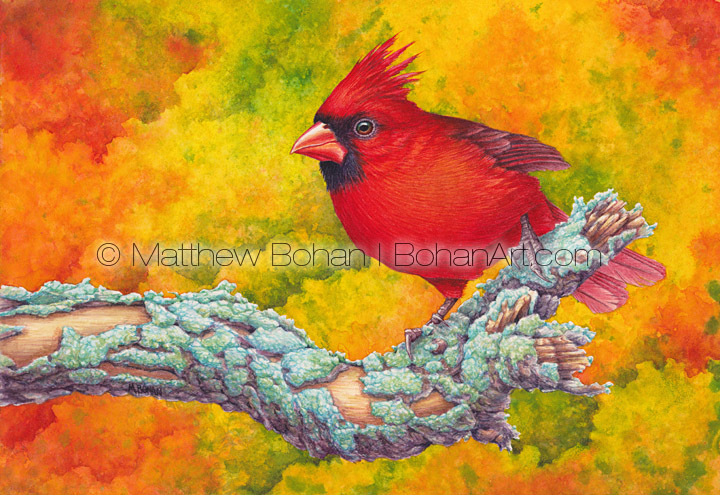 Northern Cardinal 7x10 inch Transparent Watercolor on Arches 140lb HP paper
