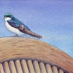 Tree Swallow Transparent Watercolor & Time-Lapse Video