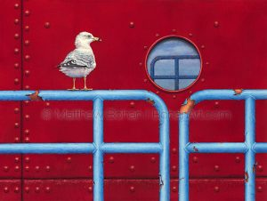 Ring-billed Gull (18 x 24-inch transparent watercolor on arches 140lb HP paper)