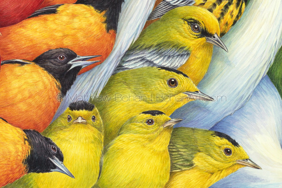 Flying Colors (Detail from 18x24 inch Transparent Watercolor on Arches 140lb HP Paper)